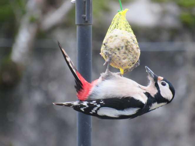 WoodpeckerGS
